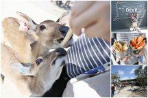 屏東恆春【鹿境Paradise Of Deer】。這是墾丁,不是奈良!可餵食、親近的梅花鹿生態園區,親子情侶旅遊不可錯過的景點!